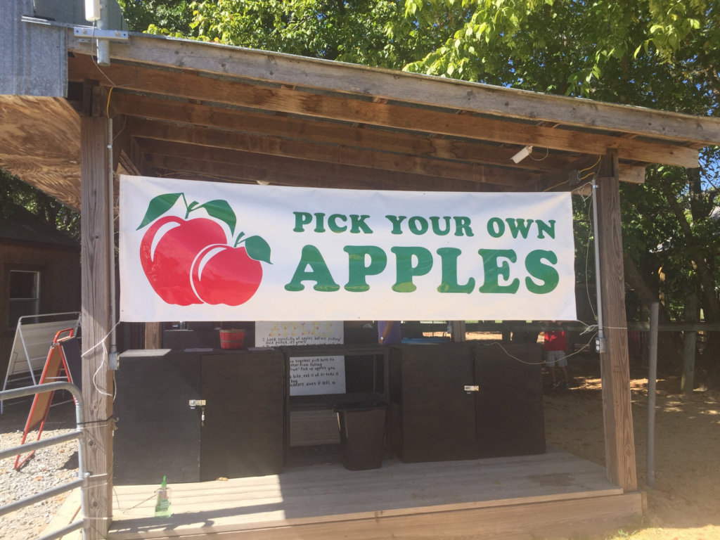 BJ Reece Apple Orchard